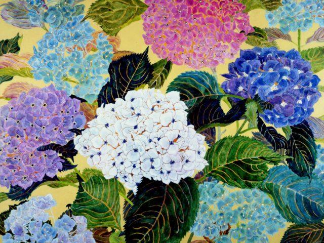紫陽花(hydrangea)